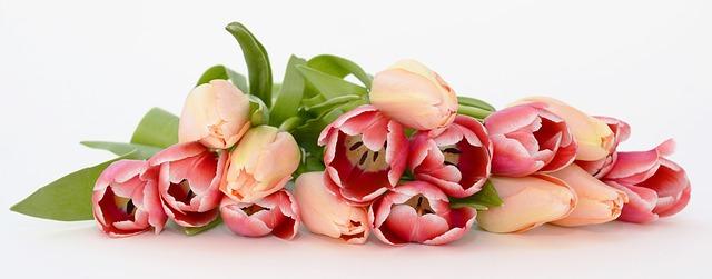 rozsypané květiny