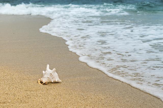 mušle na pláži.jpg